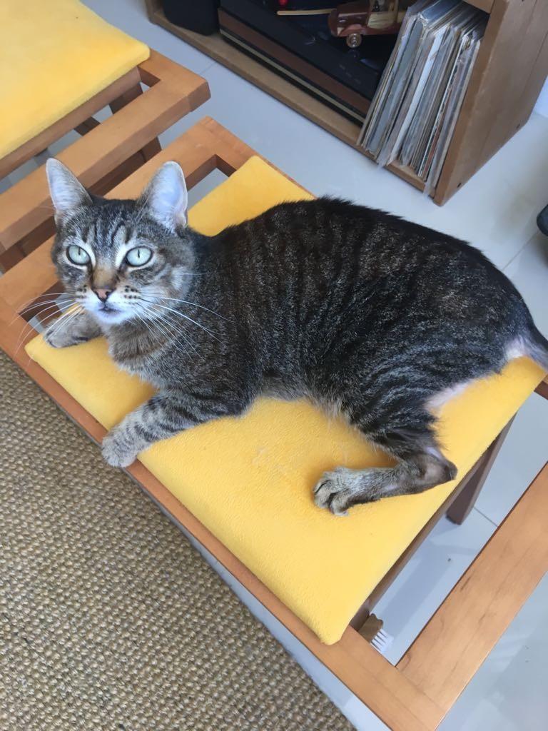 Mia, totalmente recuperada depois de começar a homeopatia Crédito: Arquivo Pessoal